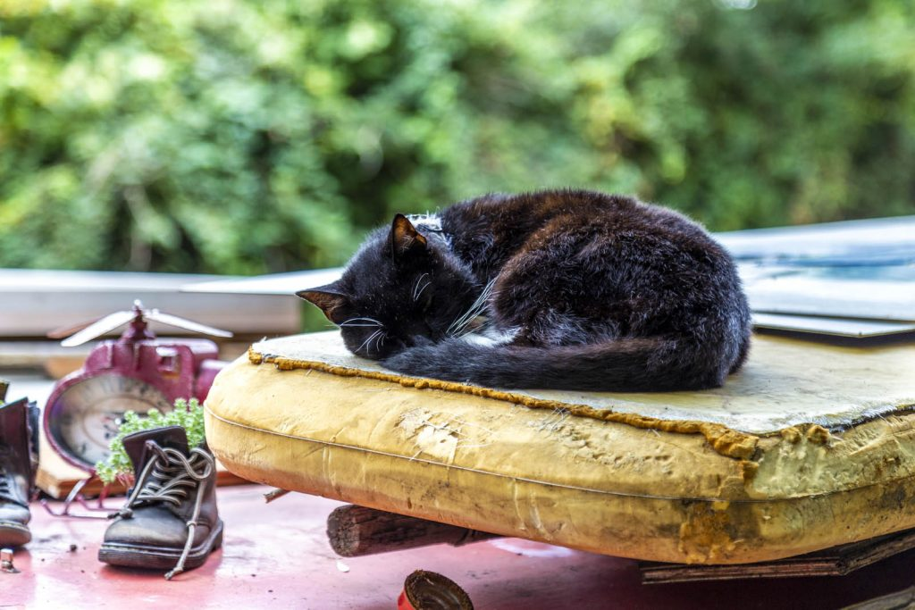 Black cat sleeping on the roof of a houseboat along the Grand Union Canal in Colne Valley, Uxbridge