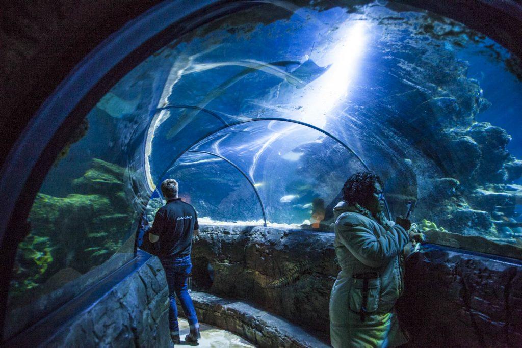 Sea Life Aquarium, London, UK