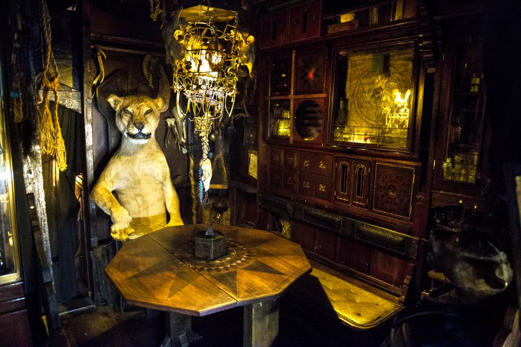 Taxidermy lion at Viktor Wynd Museum of Curiosities, London, UK